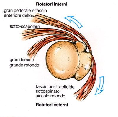 muscoli cuffia dei rotatori