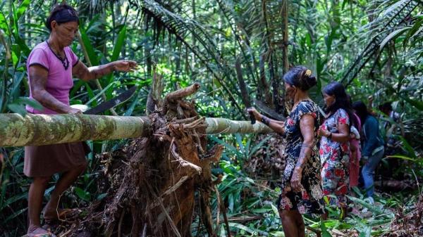 piante amazzonia