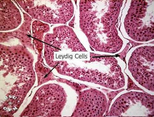 Immagine citologica