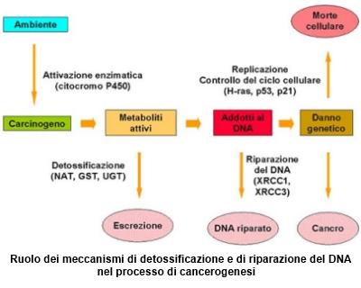 Danno cellulare e cancerogenesi