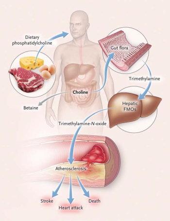 Influenza del Microbiota