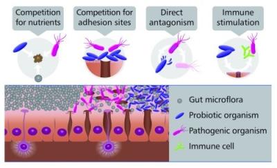 Azioni dei probiotici