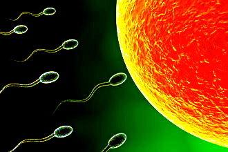 Spermatozoi Ovocita