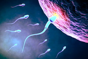 Ovocita spermatozoi