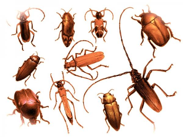 giovanniberetta_insetti01b