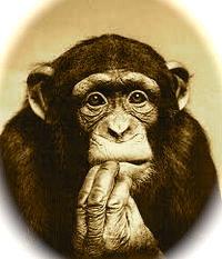 Foto di uno scimpanzè