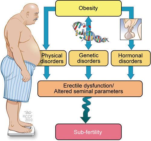 obesità e spermatozoi