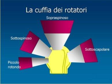 cuffia rotatori