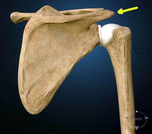 L'artrosi acromion claveare della spalla