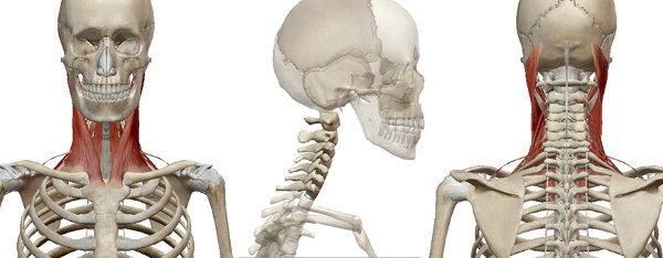 Il collo