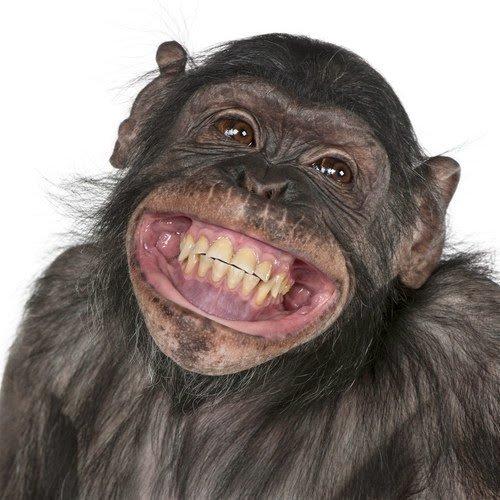 Risultati immagini per sorriso scimmia