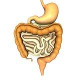 intestino e celiachia