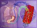 Diabete mellito e prevenzione cardiovascolare