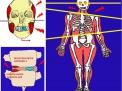 Dolore Cronico, Disturbi nel Sonno e Disfunzioni Cranio- Mandibolo -Vertebrali