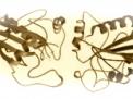 Azoospermia ed alterazioni genetiche
