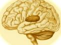 La neurite ottica