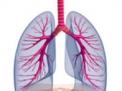 su polmone