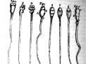 Dagli animalculi agli spermatozoi, 300 e passa anni...